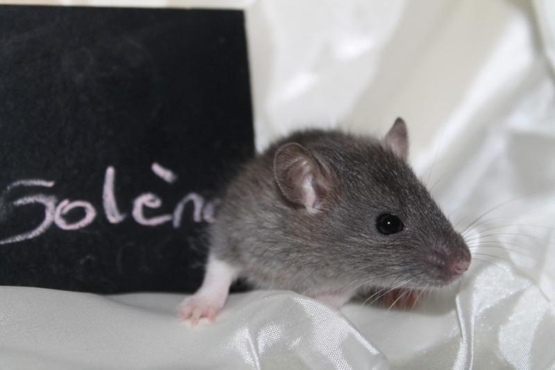 16 ratons a l'adoption , encore 5 loulous  photos P3 Img_7811