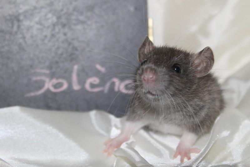 16 ratons a l'adoption , encore 5 loulous  photos P3 Img_7812