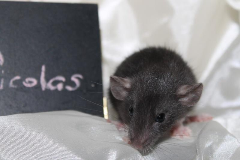 16 ratons a l'adoption , encore 5 loulous  photos P3 Img_7813
