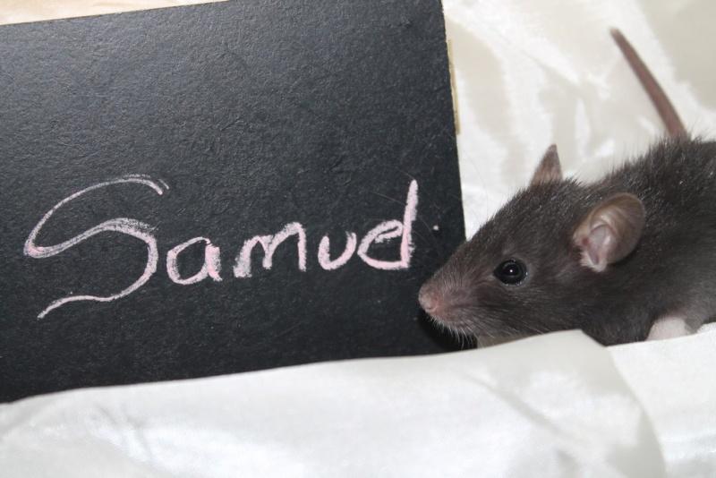 16 ratons a l'adoption , encore 5 loulous  photos P3 Img_7818