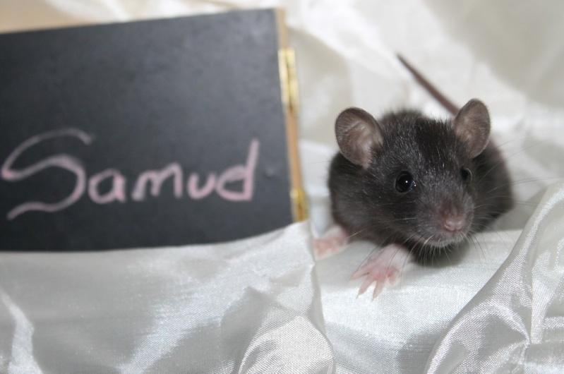 16 ratons a l'adoption , encore 5 loulous  photos P3 Img_7819