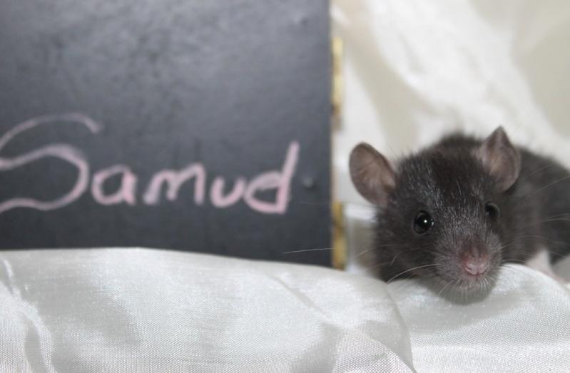 16 ratons a l'adoption , encore 5 loulous  photos P3 Img_7820
