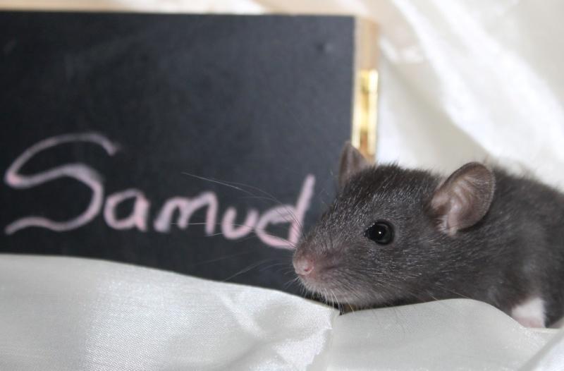 16 ratons a l'adoption , encore 5 loulous  photos P3 Img_7821