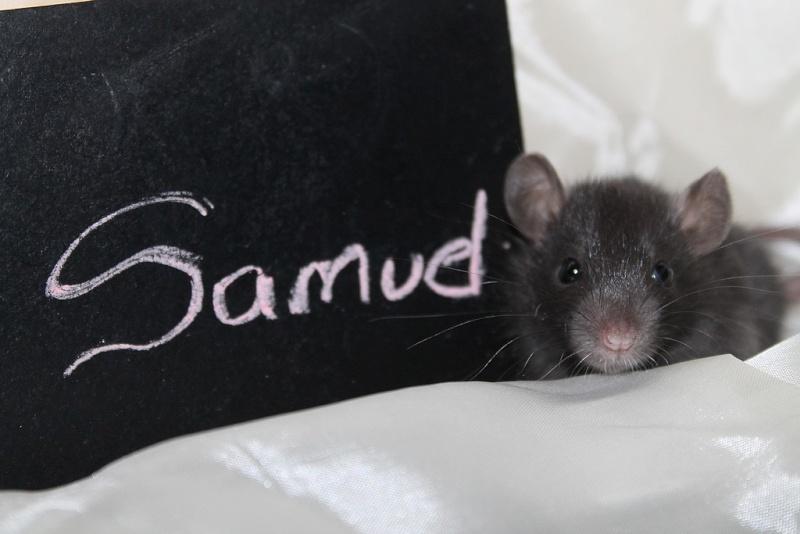 16 ratons a l'adoption , encore 5 loulous  photos P3 Img_7822