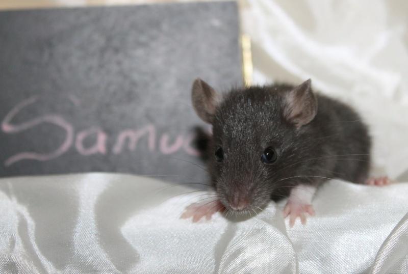 16 ratons a l'adoption , encore 5 loulous  photos P3 Img_7823