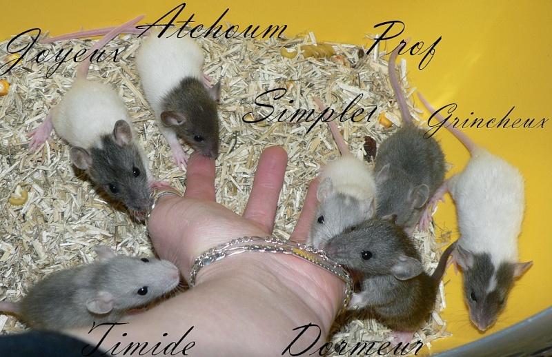 16 ratons a l'adoption , encore 5 loulous  photos P3 P1020911