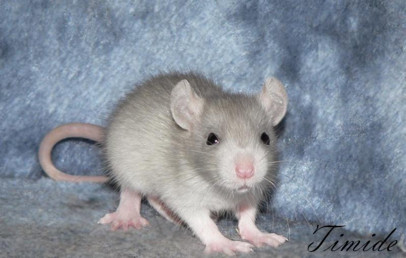 16 ratons a l'adoption , encore 5 loulous  photos P3 P1020915