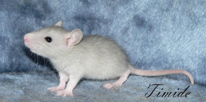 16 ratons a l'adoption , encore 5 loulous  photos P3 P1020916