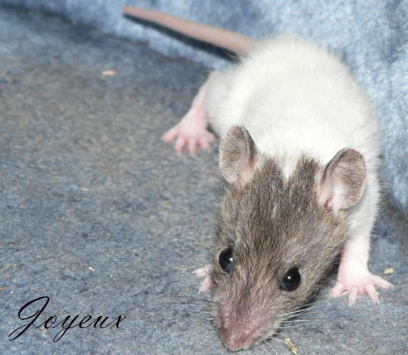16 ratons a l'adoption , encore 5 loulous  photos P3 P1020922