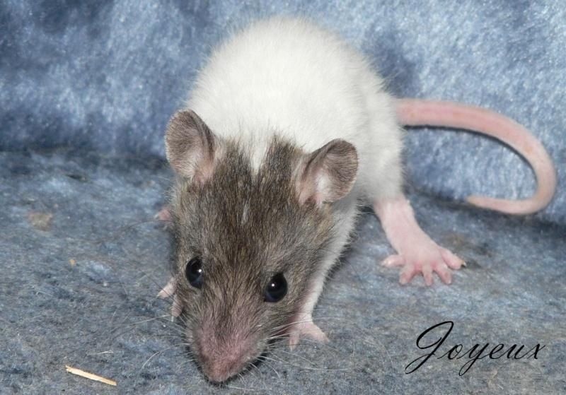 16 ratons a l'adoption , encore 5 loulous  photos P3 P1020923