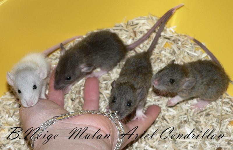 16 ratons a l'adoption , encore 5 loulous  photos P3 P1030010