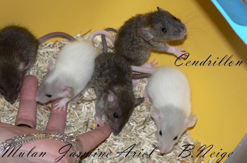 16 ratons a l'adoption , encore 5 loulous  photos P3 P1030011