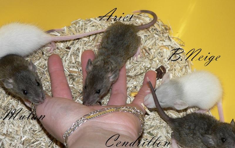 16 ratons a l'adoption , encore 5 loulous  photos P3 P1030012