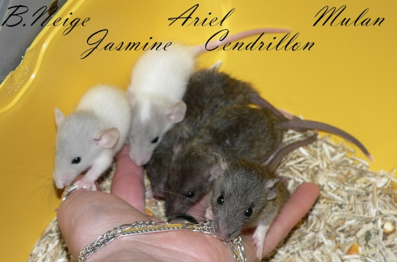 16 ratons a l'adoption , encore 5 loulous  photos P3 P1030013