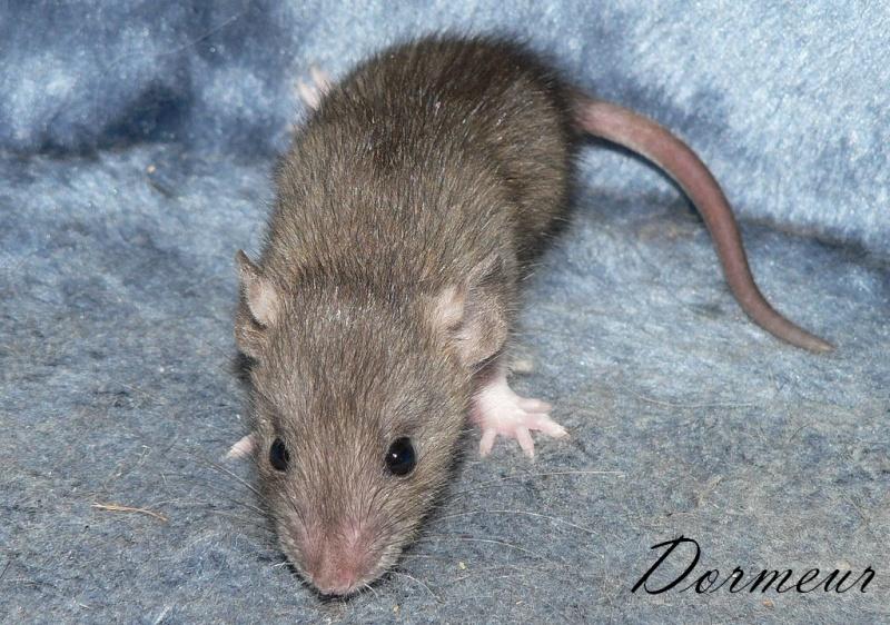16 ratons a l'adoption , encore 5 loulous  photos P3 P1030015