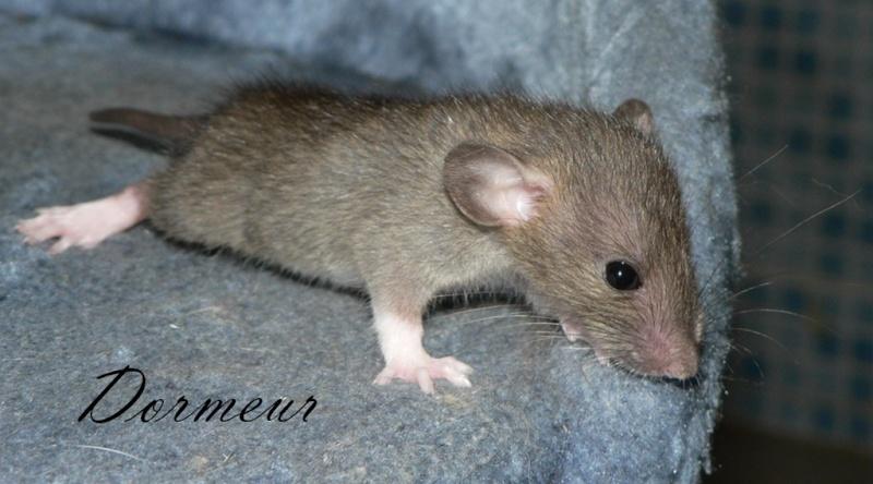 16 ratons a l'adoption , encore 5 loulous  photos P3 P1030016