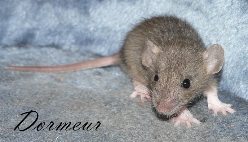 16 ratons a l'adoption , encore 5 loulous  photos P3 P1030017