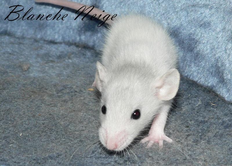 16 ratons a l'adoption , encore 5 loulous  photos P3 P1030020