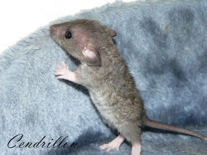 16 ratons a l'adoption , encore 5 loulous  photos P3 P1030022