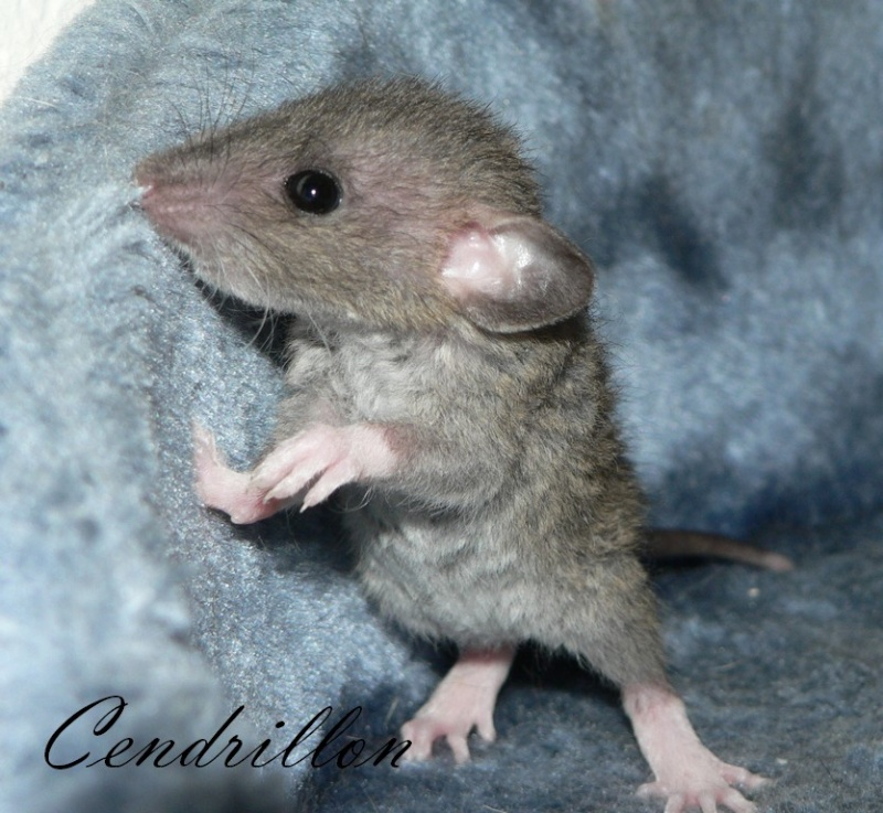 16 ratons a l'adoption , encore 5 loulous  photos P3 P1030023