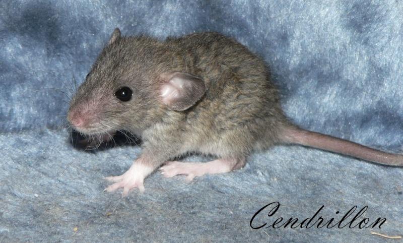 16 ratons a l'adoption , encore 5 loulous  photos P3 P1030025