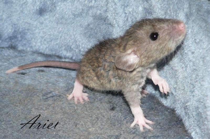 16 ratons a l'adoption , encore 5 loulous  photos P3 P1030111