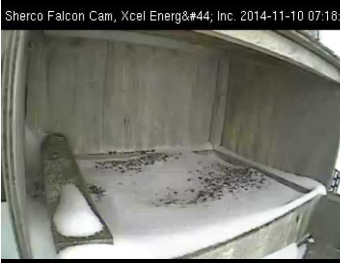 Xcel Energy Falcon Cam, Minnesota: 2014 Sherco10