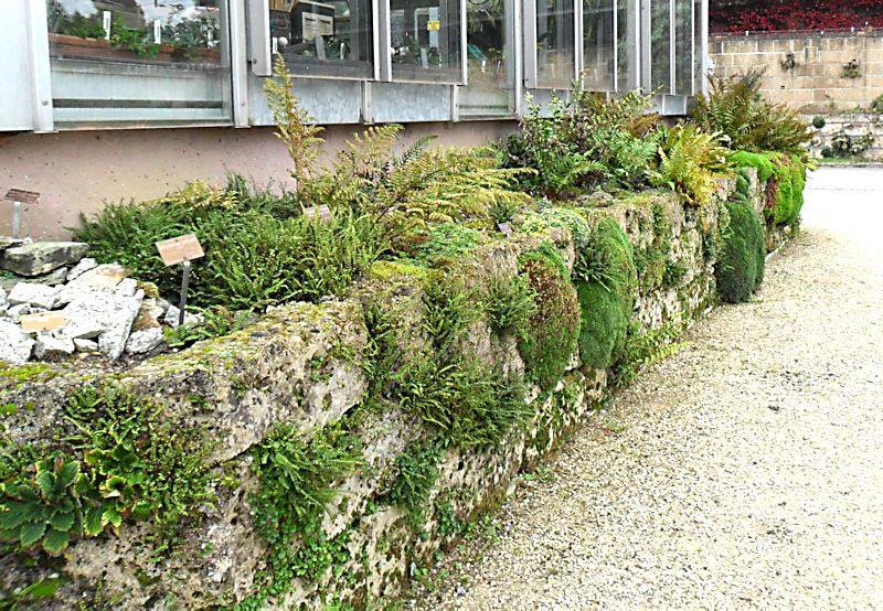 Jardin botanique de Genève Jb_gen14