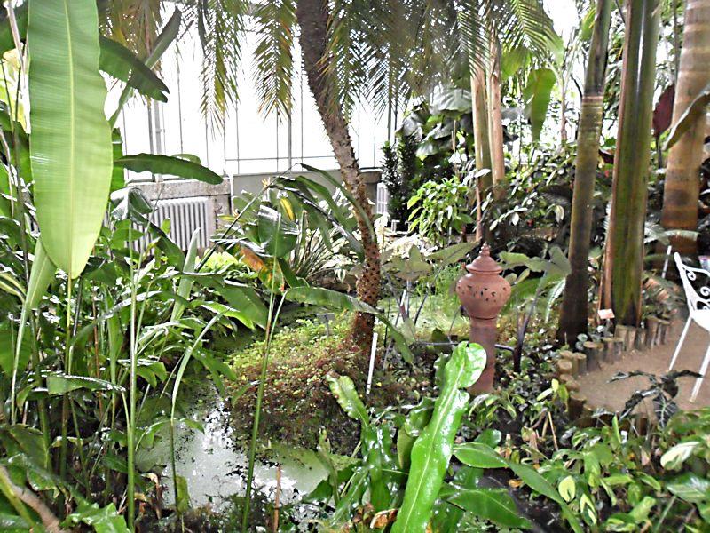 Jardin botanique de Genève Jb_gen19