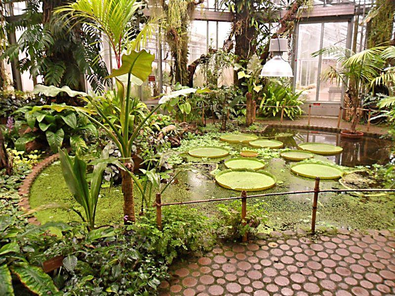Jardin botanique de Genève Jb_gen29