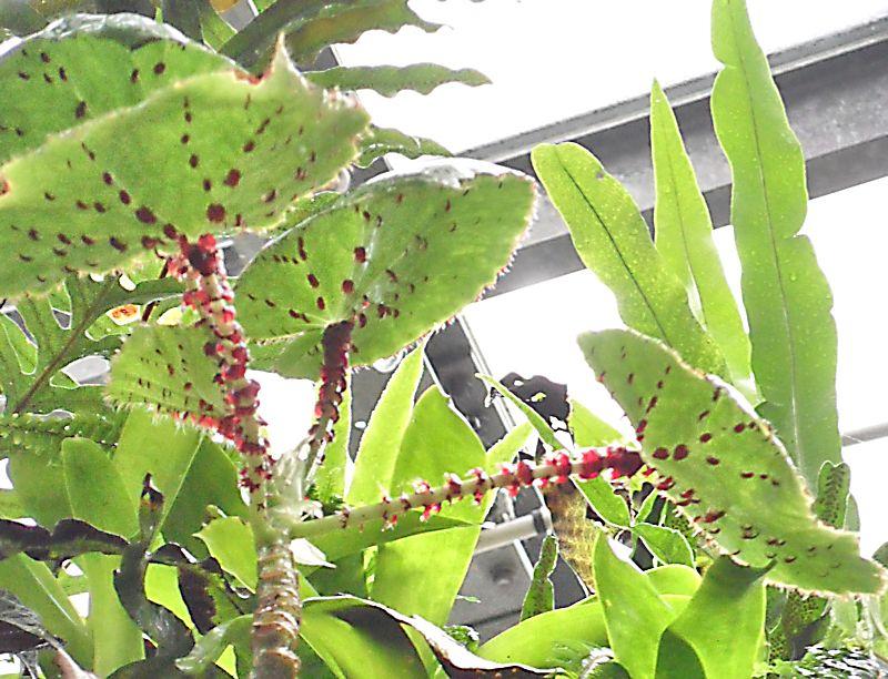 Jardin botanique de Genève Jb_gen33
