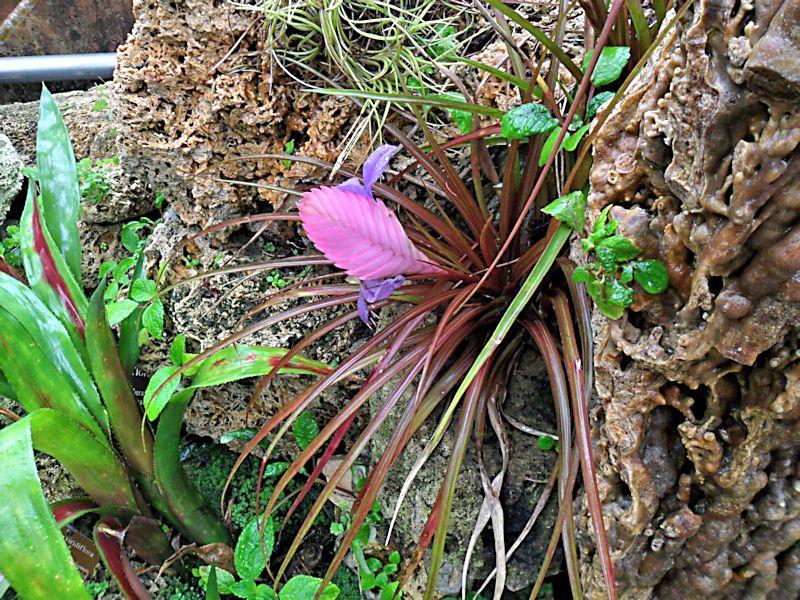 Jardin botanique de Genève Jb_gen37