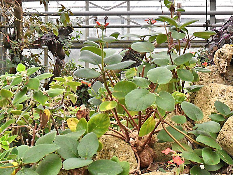 Jardin botanique de Genève Jb_gen46