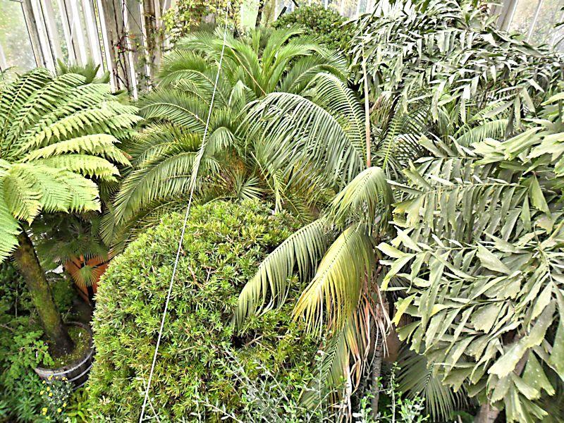 Jardin botanique de Genève Jb_gen51