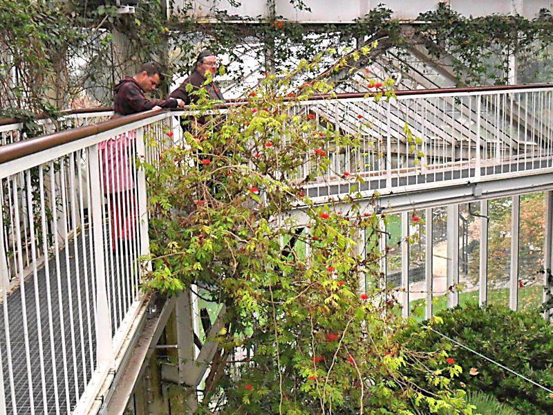 Jardin botanique de Genève Jb_gen54