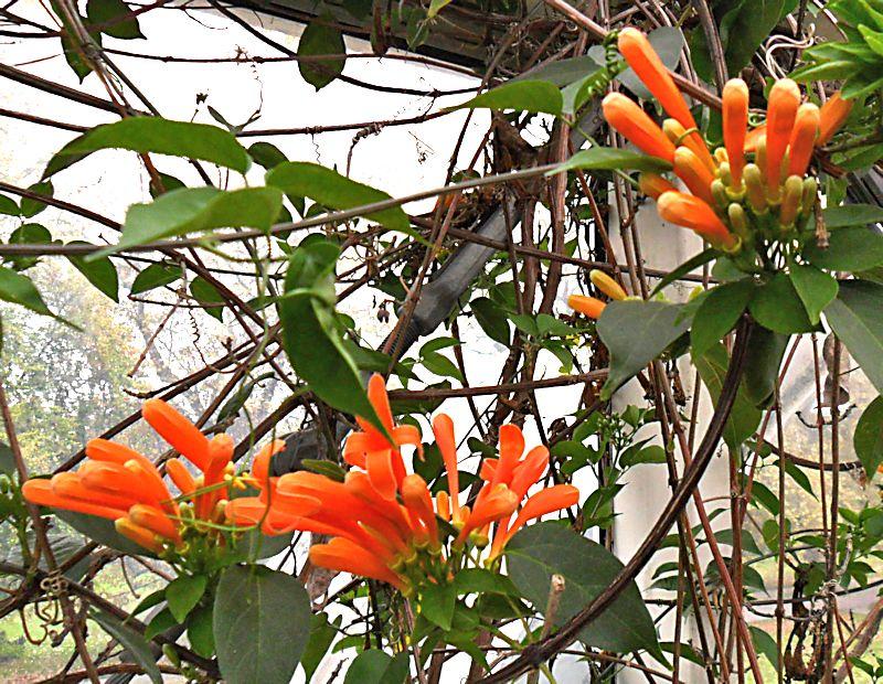Jardin botanique de Genève Jb_gen55