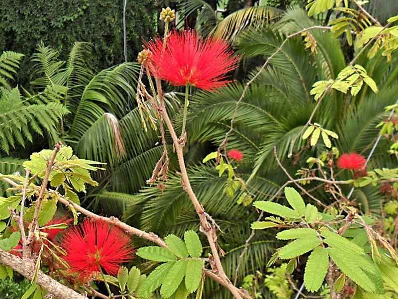 Jardin botanique de Genève Jb_gen56