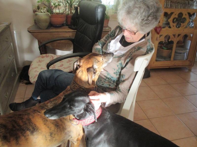 (Virtudes)LARA,  petite galga de 9 ans à l'adoption Scooby France Adoptée  - Page 9 Img_1119
