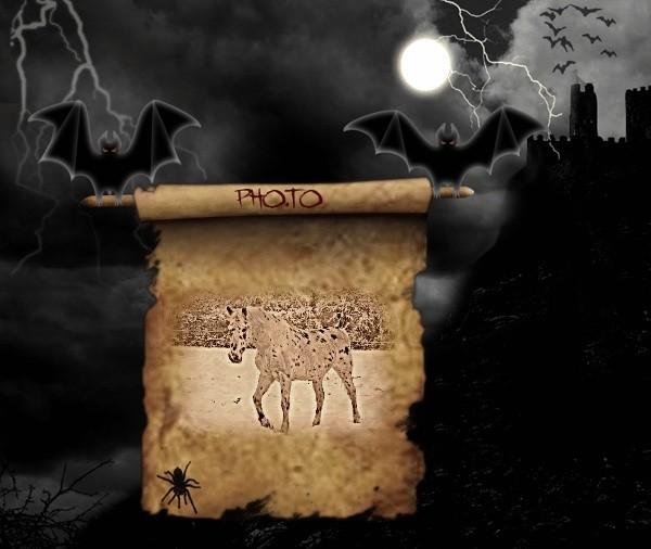 CONCOURS PHOTOS : Halloween chez les chevaux - Page 2 5492ac10