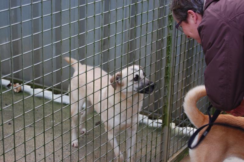 (Re)donner confiance à une chienne terrorisée - Page 5 2014-112