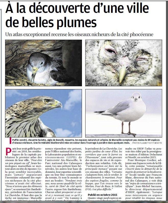 LA FAUNE ANIMALE MEDITERRANEENNE - Page 12 4018