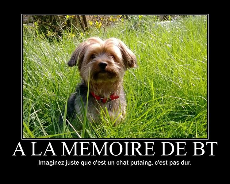 """""""De la motivation, bordel !"""" Bell s'amuse... - Page 5 Motiva14"""