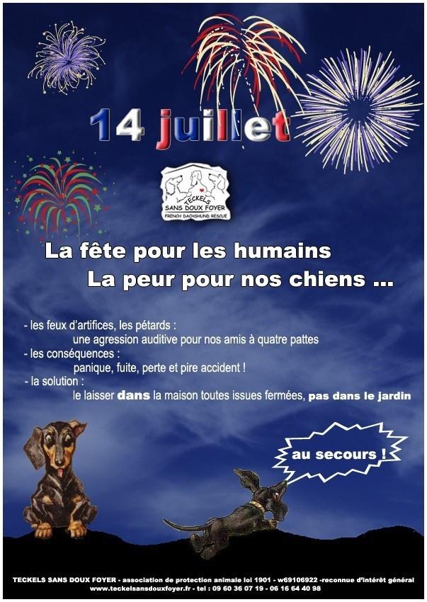 14 JUILLET ..FEUX D'ARTIFICE PEUR ET DANGER POUR LES CHIENS Affich10