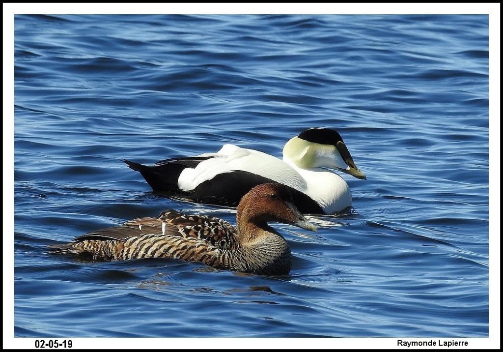 Oiseaux de mer Dscn0017