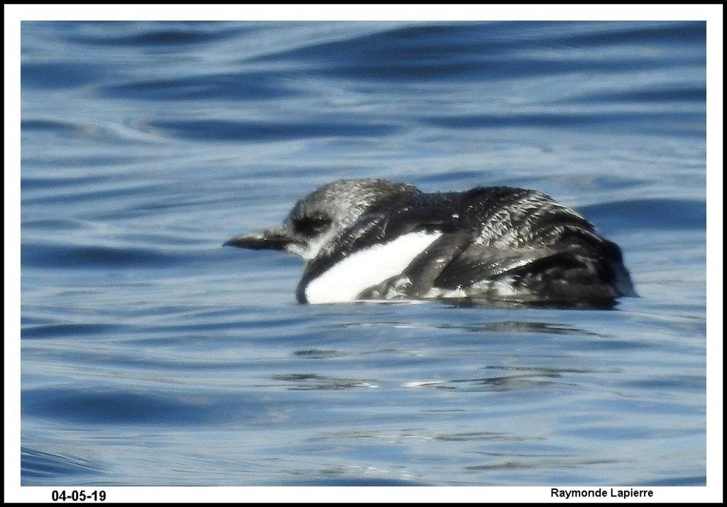 Oiseaux de mer Dscn0018