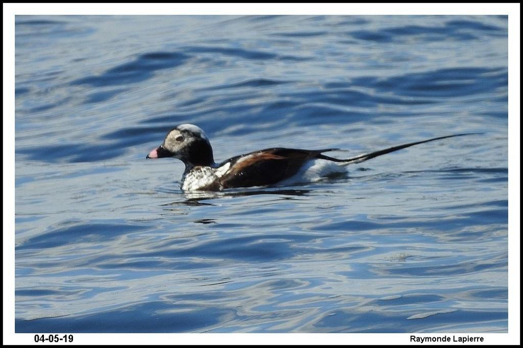 Oiseaux de mer Dscn0114