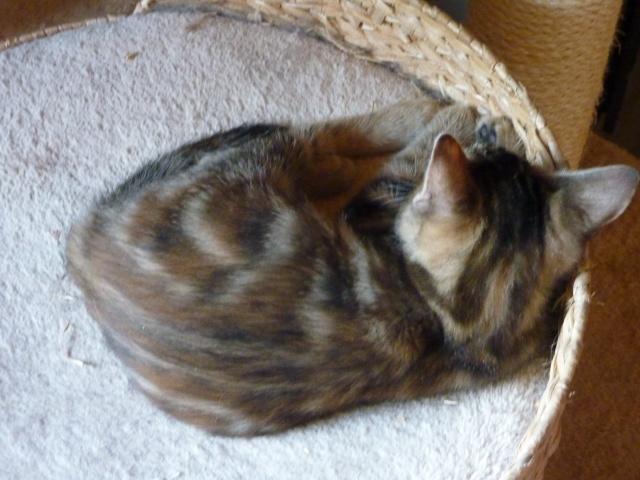 Jelly, Jynn et Jill petites puces nées vers le 8 octobre P1060712