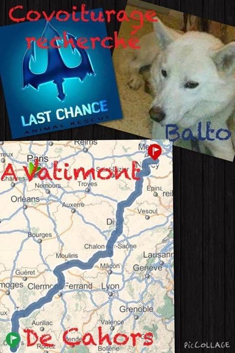 Balto type Husky ok chiens chats enfants ASSO46 ADOPTE 10606010