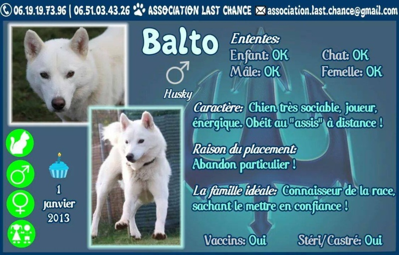Balto type Husky ok chiens chats enfants ASSO46 ADOPTE 15120910