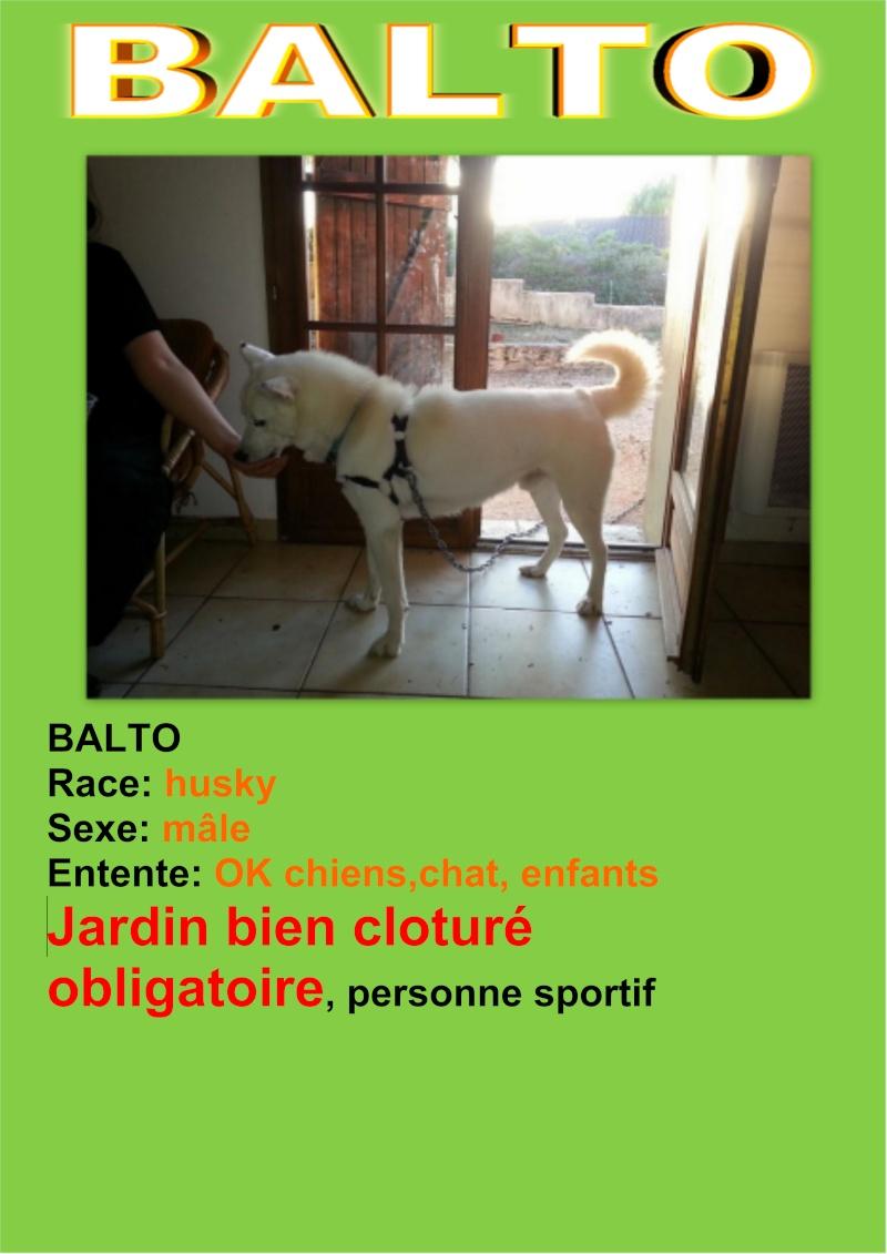 Balto type Husky ok chiens chats enfants ASSO46 ADOPTE Balto11